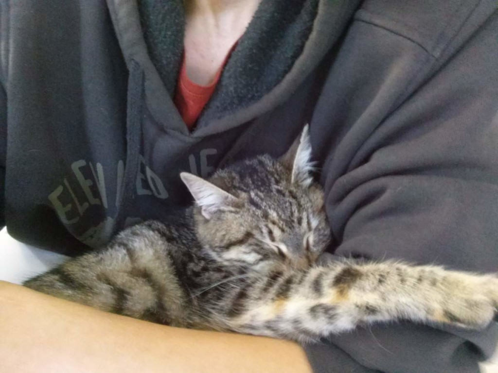 Lotto the Cat, sleeping in my arms