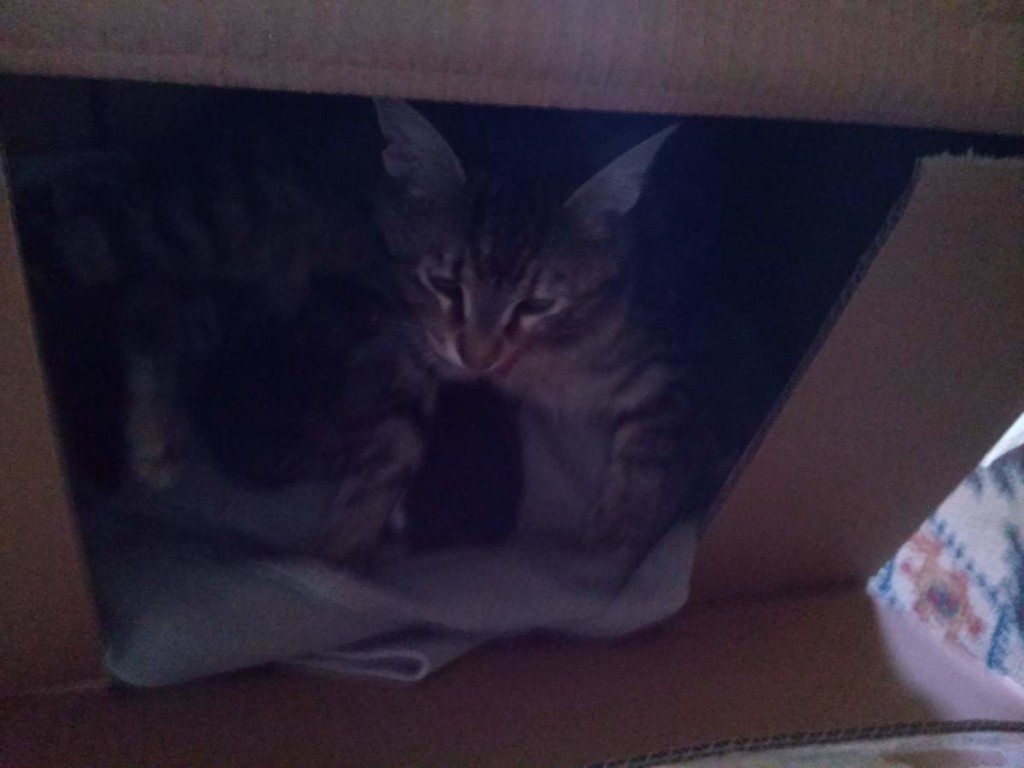 Two kittens were born