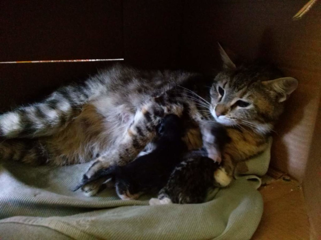 Nursing the first two kittens