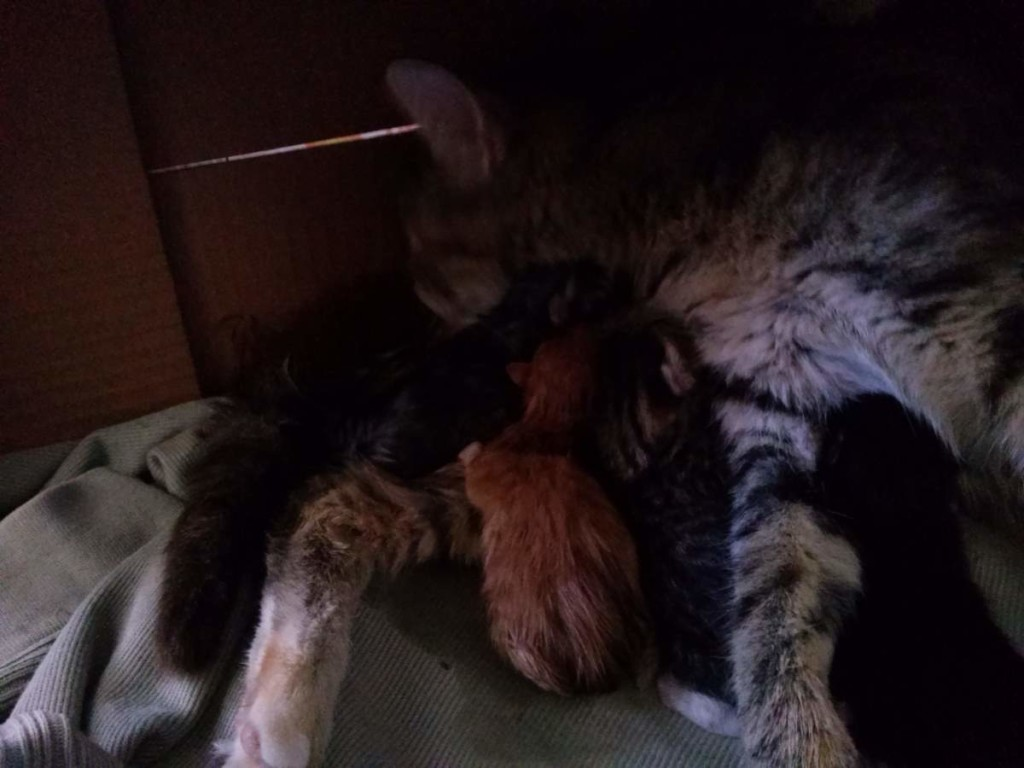 The birth of the fourth kitten