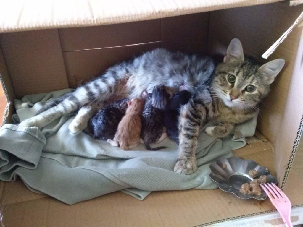 The four kitten and Lotto