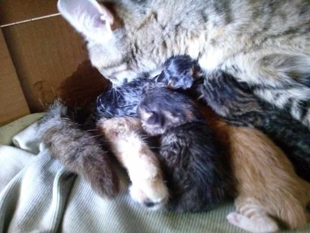 The birth of the fifth kitten
