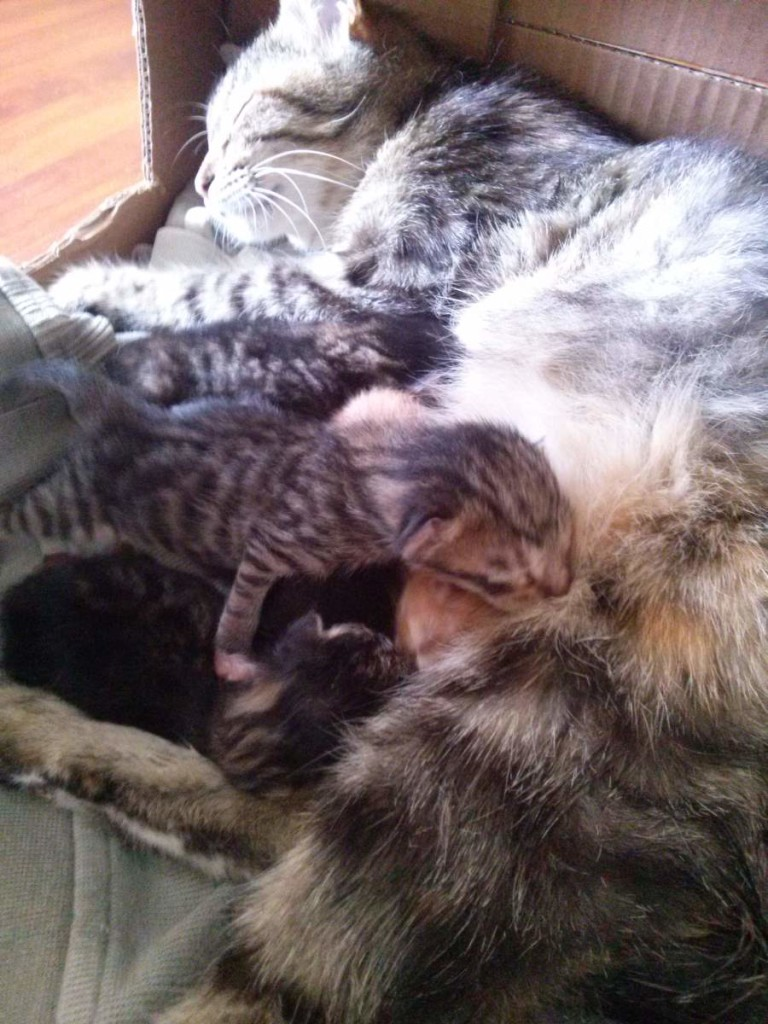 Lotto and her five kittens