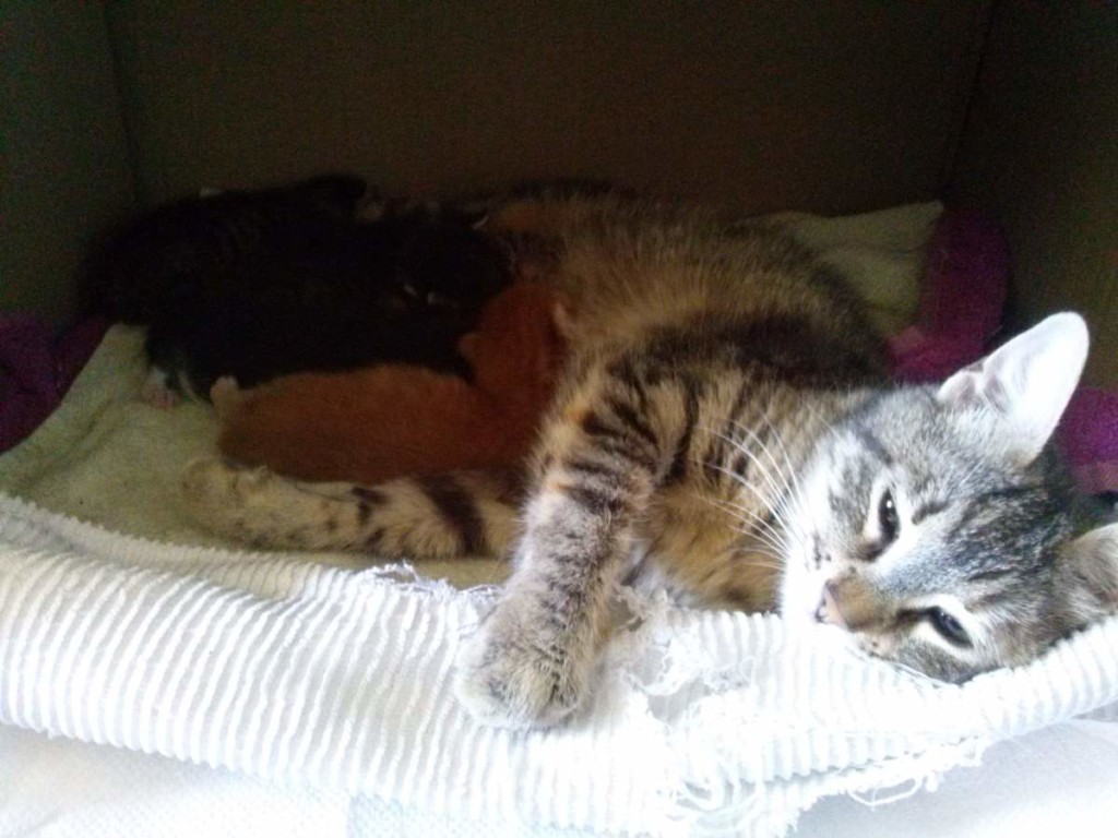 Lotto and her kittens (April 5, 2015) (02)