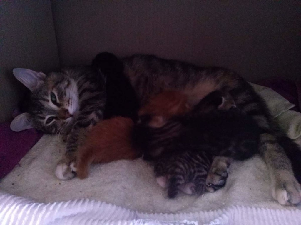 Lotto and her kittens (April 5, 2015) (04)