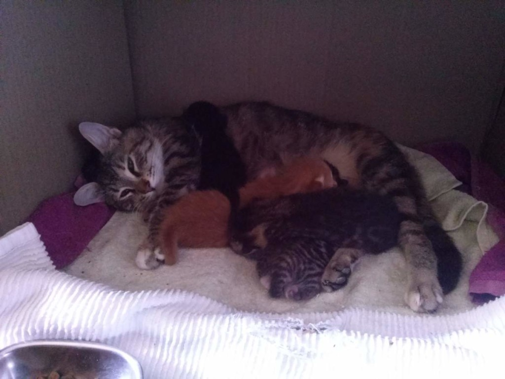 Lotto and her kittens (April 5, 2015) (05)