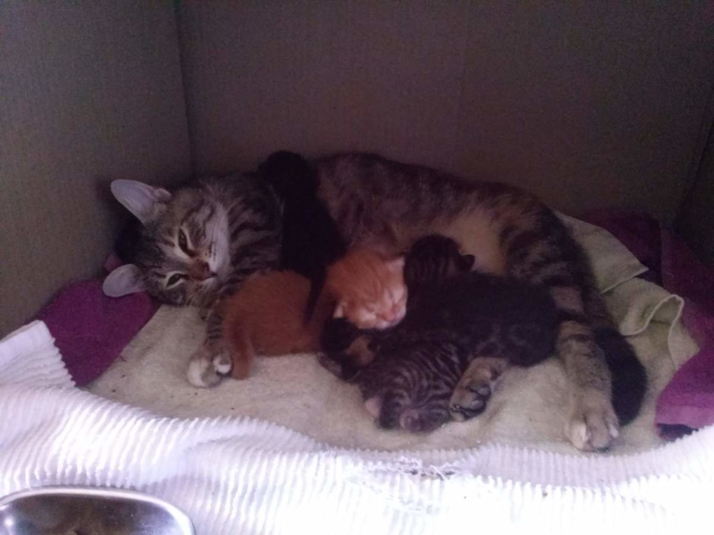 Lotto the cat, and her five kittens (April 05, 2015) - 06