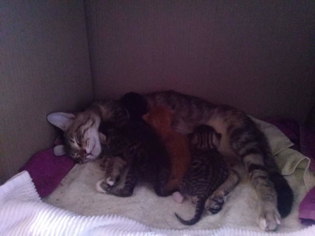 Lotto and her kittens (April 5, 2015) (07)