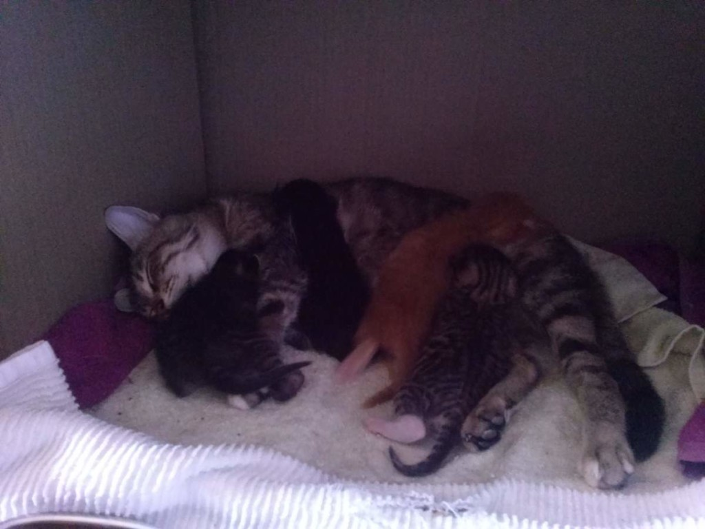 Lotto and her kittens (April 5, 2015) (08)