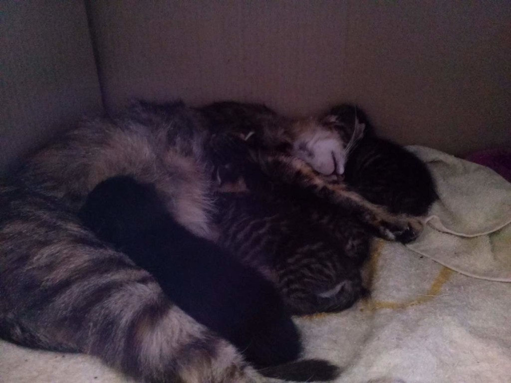 Lotto and her kittens (April 5, 2015) (11)