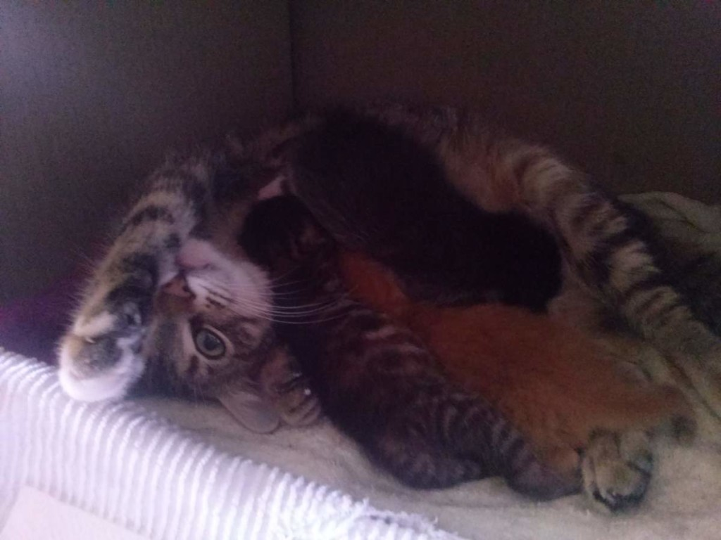 Lotto and her kittens (April 5, 2015) (12)