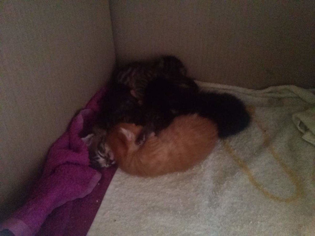 Lotto and her kittens (April 5, 2015) (13)