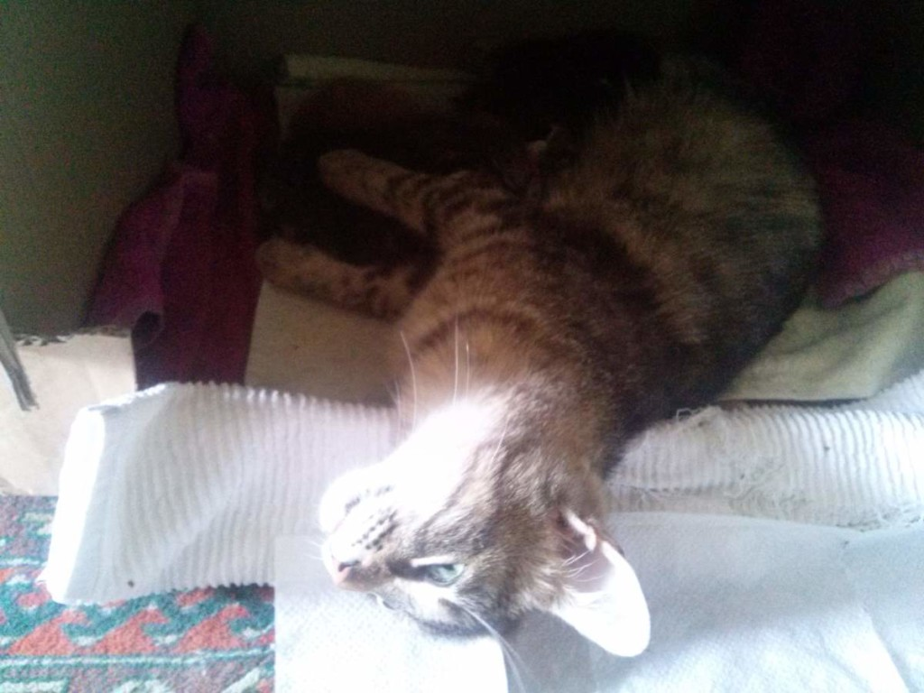 Lotto and her kittens (April 5, 2015) (14)