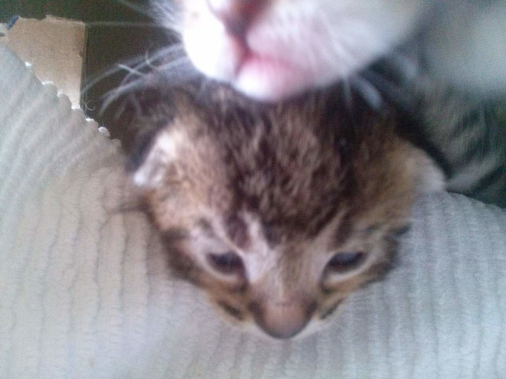 Lotto and her kittens (April 5, 2015) (17)