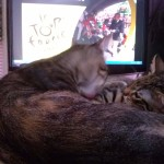 2015-07-04-11 Tour de France and cats