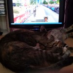 2015-07-04-12 Tour de France and cats