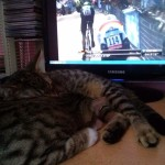 2015-07-04-15 Tour de France and cats