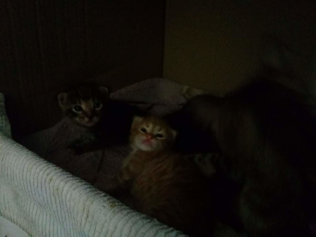 Two kittens - the orange one and the female tabby