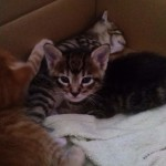 April 23, 2015 - 06 - the female tabby