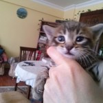 April 23, 2015 - 09 - the male tabby