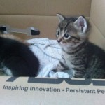 April 23, 2015 - 14 - the female tabby