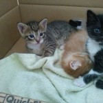 April 23, 2015 - 15 - the kittens