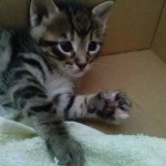April 23, 2015 - 16 - the female tabby