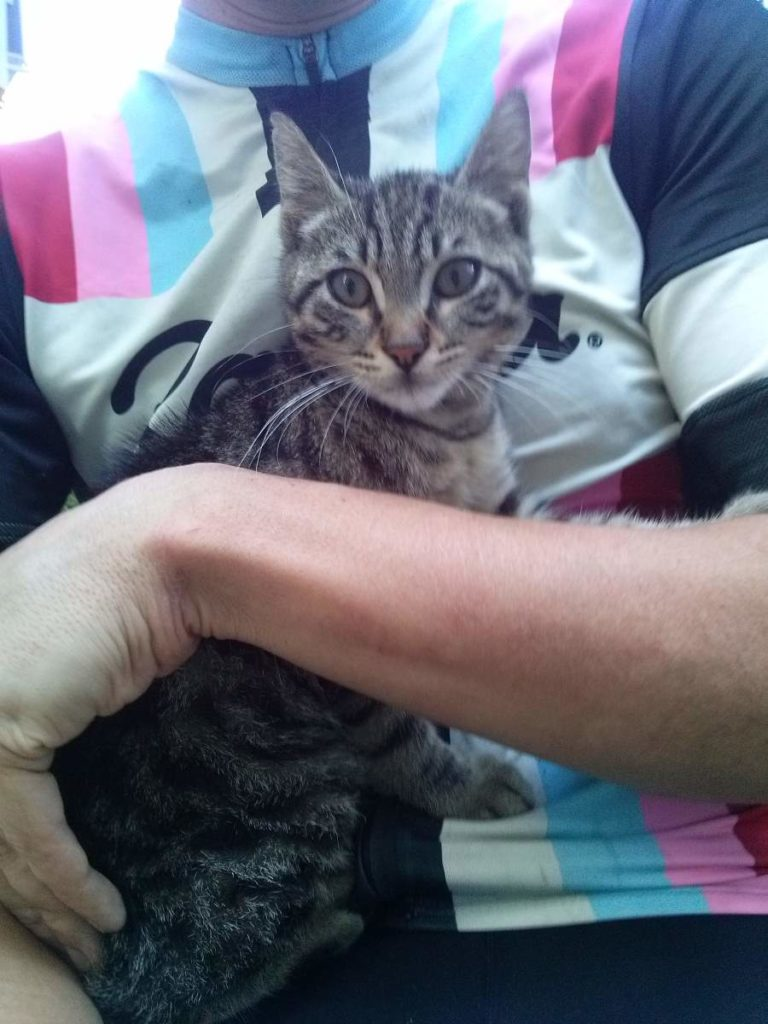 2015-07-17-03 with tabby kitten