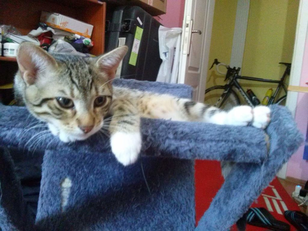 2015-07-17-06 at home with tabby kitten