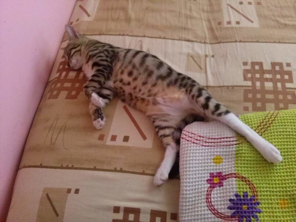 2015-07-18-03 tabby kitten sleeping