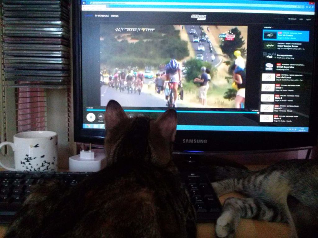 2015-07-18-06 watching the Tour de France with cats