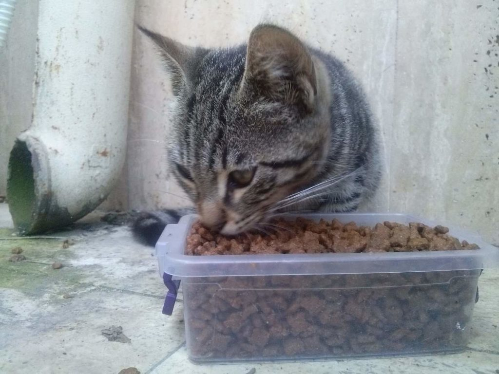 2015-07-19-02 Bosphorus University, feeding the tabby kitten