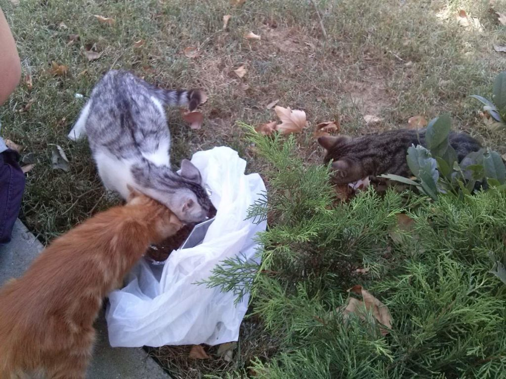 2015-07-20-01 Bosphorus University, feeding the kittens