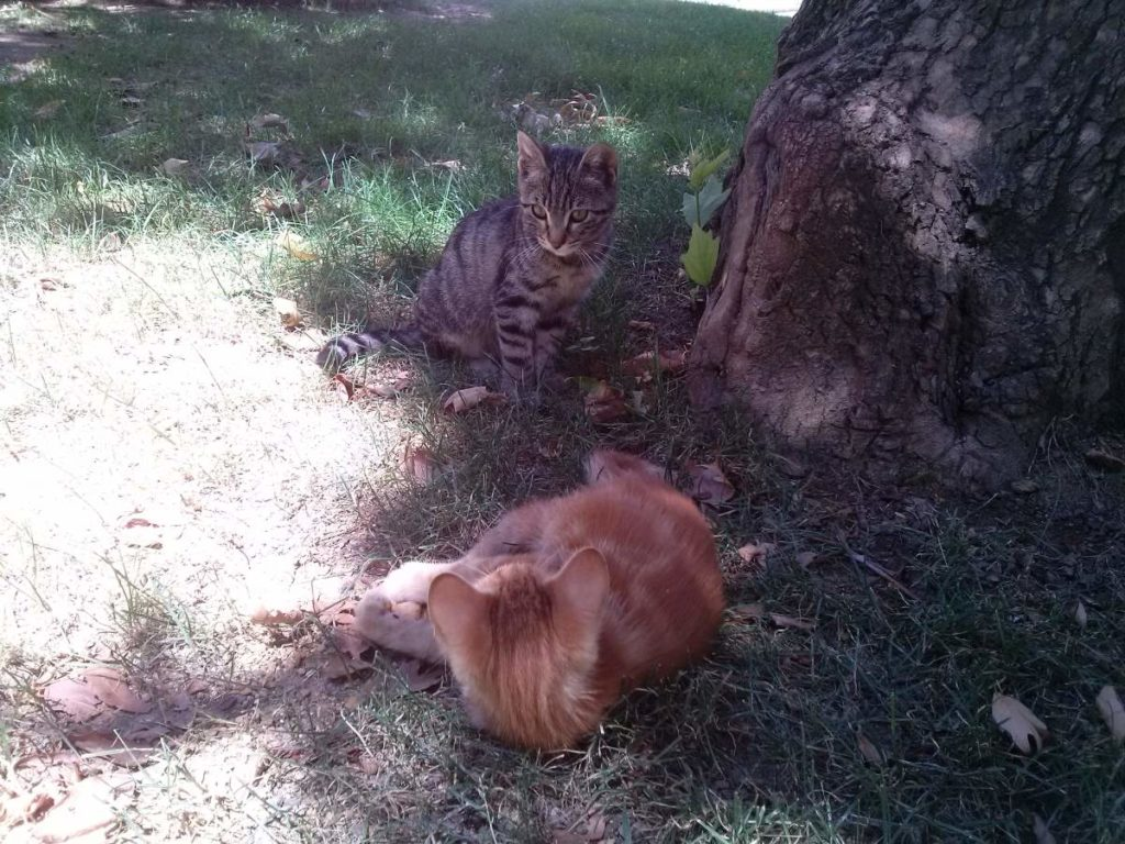 2015-07-20-03 Bosphorus University, kittens playing