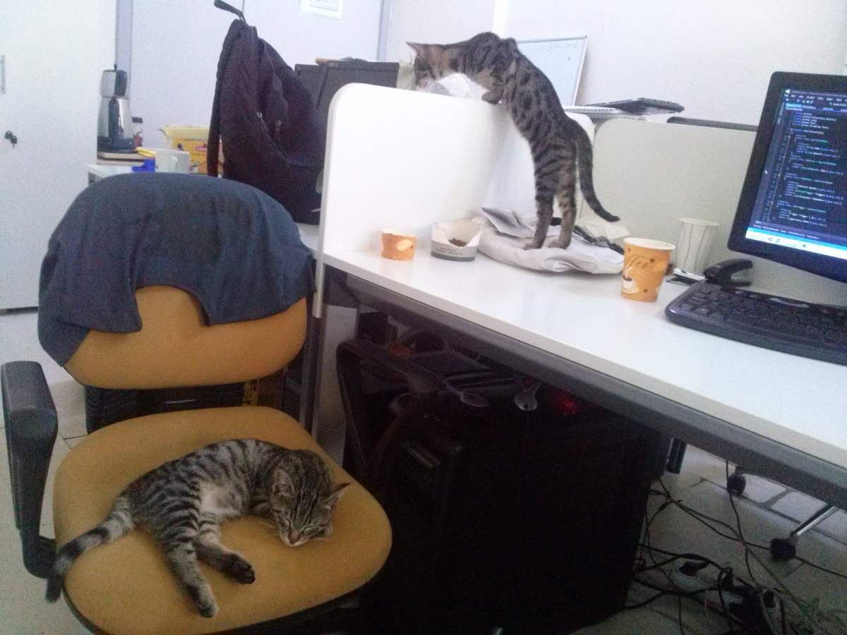 2015-07-22-05 Twin tabby kittens at the office