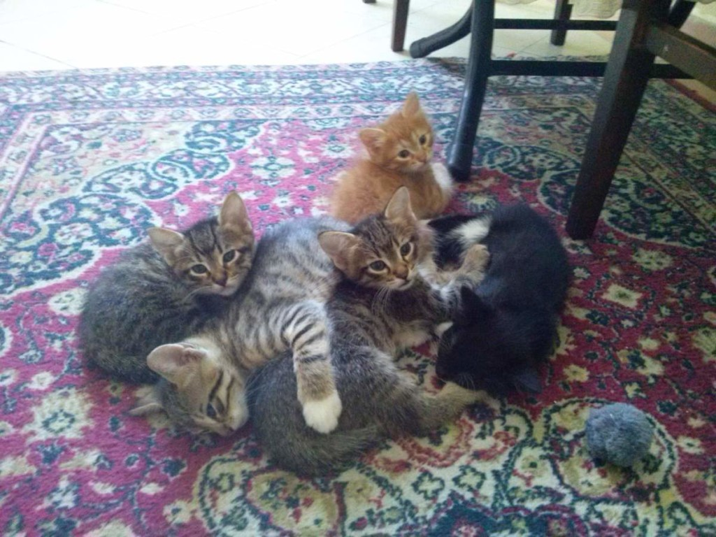 May 13, 2015 - The kittens