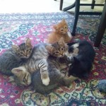 At home with kittens