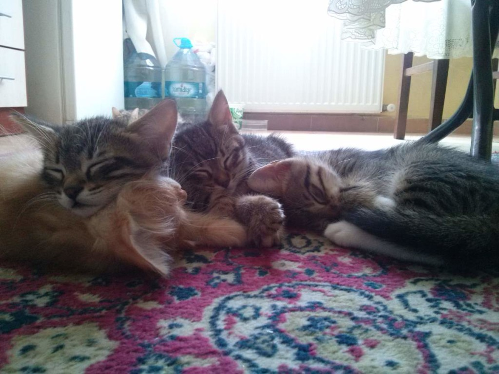May 17, 2015 - the kittens are sleeping
