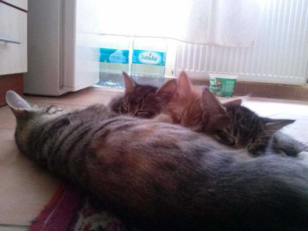 May 19, 2015 - Mother cat nursing the kittens 4
