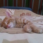 May 20, 2015 The Yellow Kitten is sleeping (03)