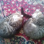 May 23, 2015 Two kittens sleeping