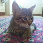 2015-05-26, Male tabby on the carpet