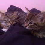 2015-05-30, kittens number two and five