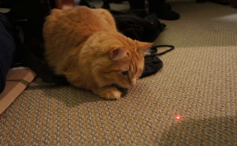 Are laser pointers good toys for cats?