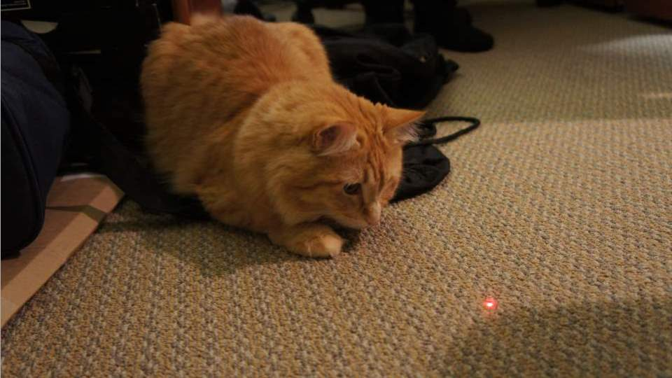 Image result for laser pointer for cats