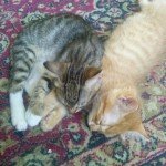 2015-05-31 - Two kittens sleeping on the carpet