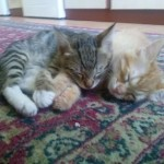 2015-05-31 - Two kittens sleeping on the carpet 2