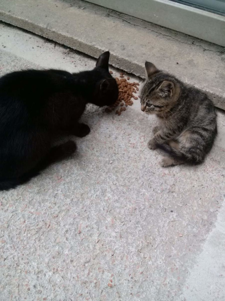 2015-06-03 A black cat and a little big-eyed tabby kitten
