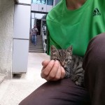 2015-06-03 Little big-eyed tabby kitten 2