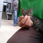 2015-06-03 Little big-eyed tabby kitten 3